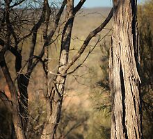 Beyond The Trees, Quilpie © Vicki Ferrari Photography by Vicki Ferrari