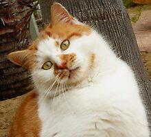 """""""KIYA"""" I Is Speshul Cat.......... by Toni Kane"""