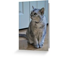 Adorbz Selkirk Rex Greeting Card