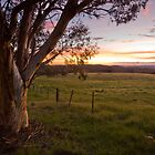 Sunset Gum - Canberra back country by Barry Armstead