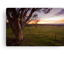 Sunset Gum - Canberra back country Canvas Print