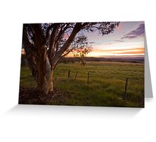 Sunset Gum - Canberra back country Greeting Card