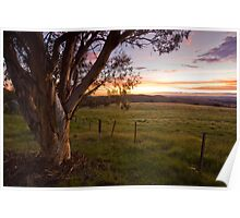 Sunset Gum - Canberra back country Poster