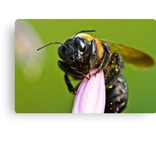 Buzz Buzz Bumble Bee Canvas Print