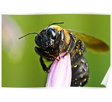 Buzz Buzz Bumble Bee Poster