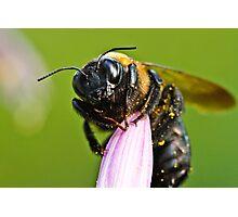 Buzz Buzz Bumble Bee Photographic Print