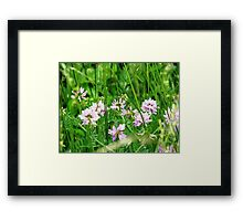 Virginia Wildflowers Framed Print