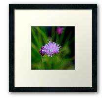 Almost Solitary Framed Print