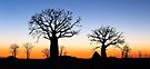 Boab Silhouettes (Panorama) by Mieke Boynton