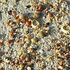 Sand and shells - a beach close up by John Butterfield