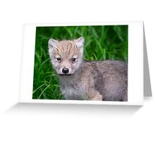 Arctic Wolf Pup Portrait  Greeting Card