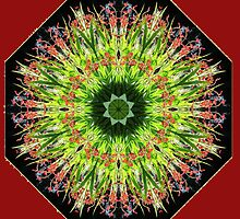 LUCIFER CROCOSMIA MANDALA by ReflectionsbyFW