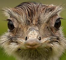 How many times do I have to tell you, I'm not an Ostrich! by Mark Hughes