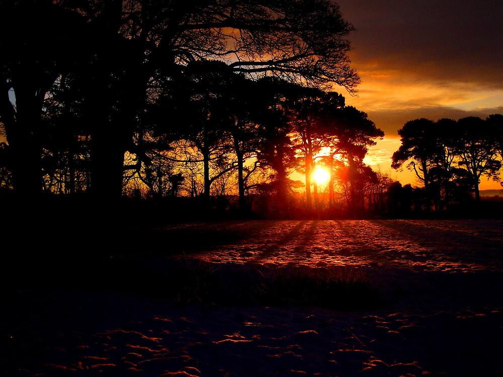 Black Winter Sunrise by mairead62