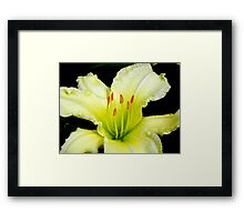 Raindrops on Petals... ©  Framed Print