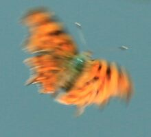 Wood comma butterfly in flight - a beautiful blur by Penny V-P
