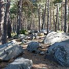 Walk in the forest in Andorra by Arie Koene