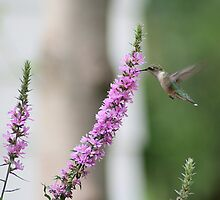 Hummer by Linda Busby