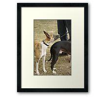 Jeremy whippet Framed Print