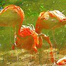 Dreaming of Flamingos by Alberto  DeJesus