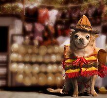 Chihuahua Bandito by Dale O'Dell