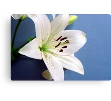 White lily on blue Canvas Print
