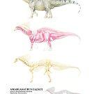 Amargasaurus Cazaui Factsheet by A V S TURNER
