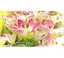 The Lily Patch Photographic Print