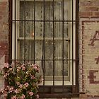 Window by marymdmed