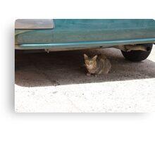 Cat Under Turquoise Car  Canvas Print