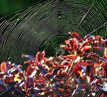 Wild Web - Impressions by Susie Peek