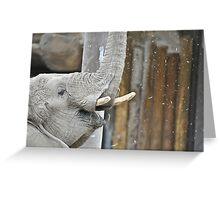 Momma Elephant Greeting Card
