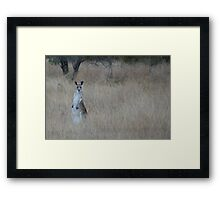 Western Grey Framed Print