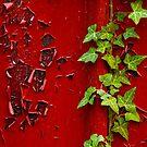 Peeling Ivy by Kevin Skinner