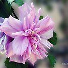 Ragged Beauty by ldermid75