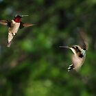 Hummers by Lolabud