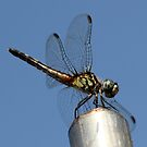 blue sky and dragon fly by katpartridge