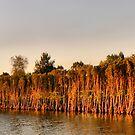 Parramatta River. by Lynne Haselden