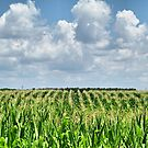 Cornrows by Monnie Ryan