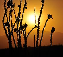 OCOTILLO SUNSET by George Trimmer