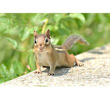 Cute Little Chipmunk. Photographic Print