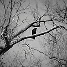The Night Watchman by Eric Scott Birdwhistell