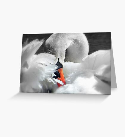 Soft As A Feather!  Greeting Card