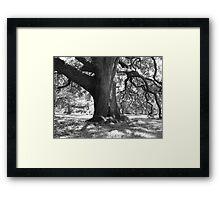 Houston Oak Framed Print