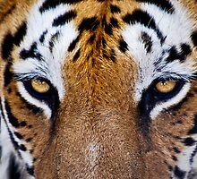 The Hypnotic Hunter by Ravi Chandra