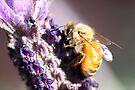 Bee Up Close by yolanda