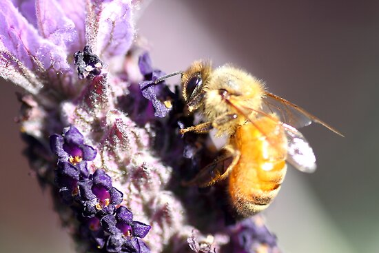 Bee Up Close by yolanda