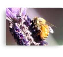 Bee Up Close Canvas Print