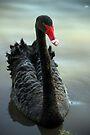 Black Swan by yolanda