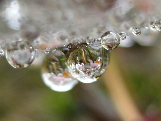 webbed water by millymuso
